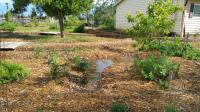 infiltration trench - mulch basin