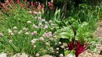 Skaggs -gardens with perennial food