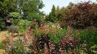 Skaggs -gardens with drought tolerant plants
