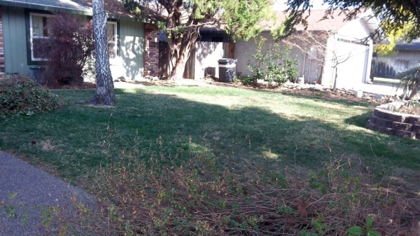 Foster -lawn before