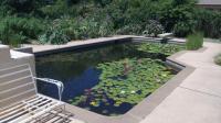 Pool to Pond -