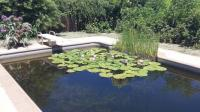 Pool to Pond -