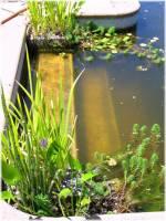 Pool to Pond -steps 2013