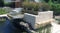 Pool to Pond -biofilter
