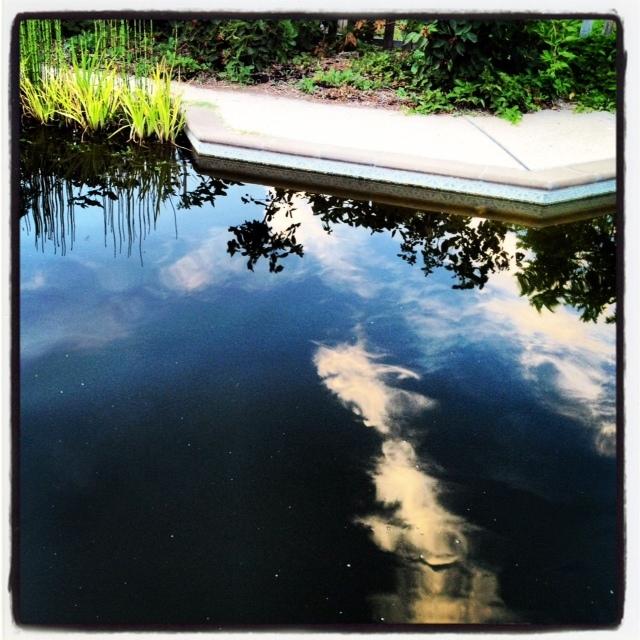 Pool to Pond -3