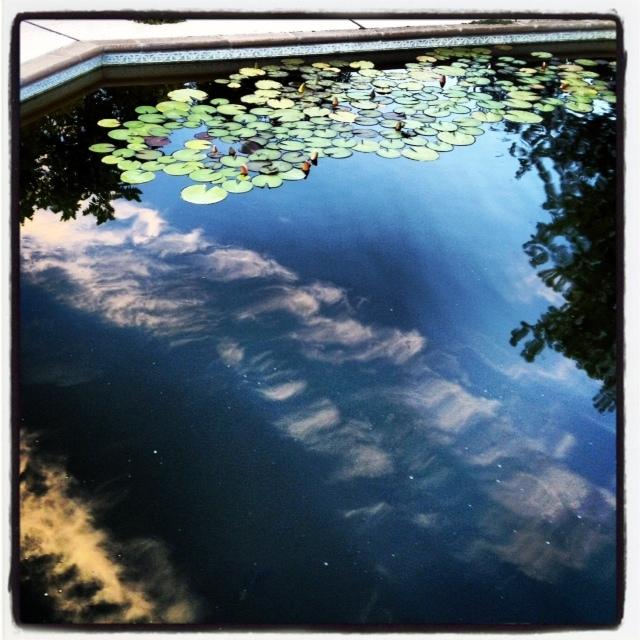 Pool to Pond -4
