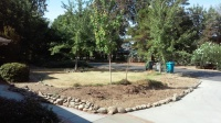 Naylor -front yard before