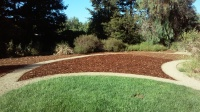 Naylor -sheet mulch