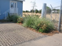 Aadvantage -drought tolerant plants