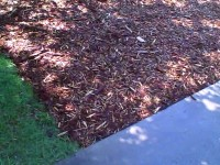 Nillson -edges of sheet mulch, driveway and turf