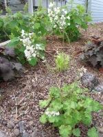 Charter -drought tolerant plants