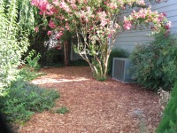 Charter -after sheet mulch