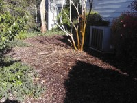 Charter -1 year after sheet mulch