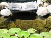 Ladwig -pond biofilter