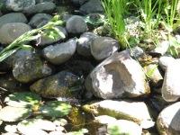 Ladwig -creek into pond