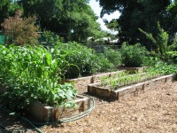 raised cedar vegetable beds