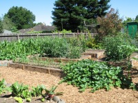Ladwig -vegetable garden food production