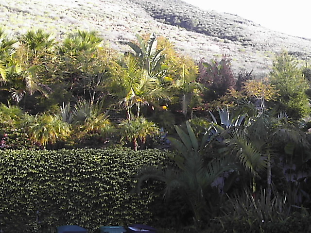 Cooper -back hillside garden