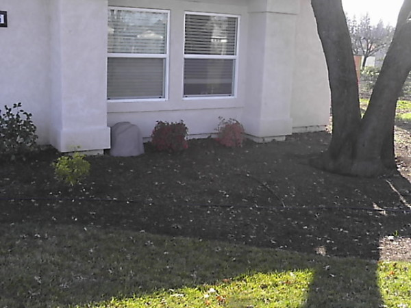 Coots -front side view landscape before