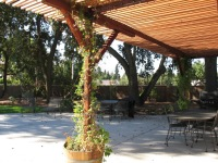 Coots -pergola deciduous vines in barrels