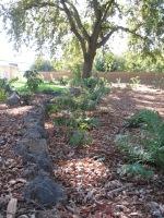 Coots -oak woodland garden