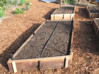 Coots -raised bed vegetable garden