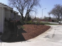 sheet mulch example -step 4
