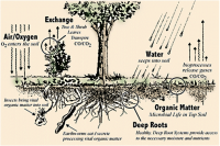 soil interactions