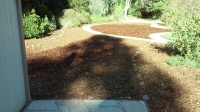 Naylor -sheet mulch after