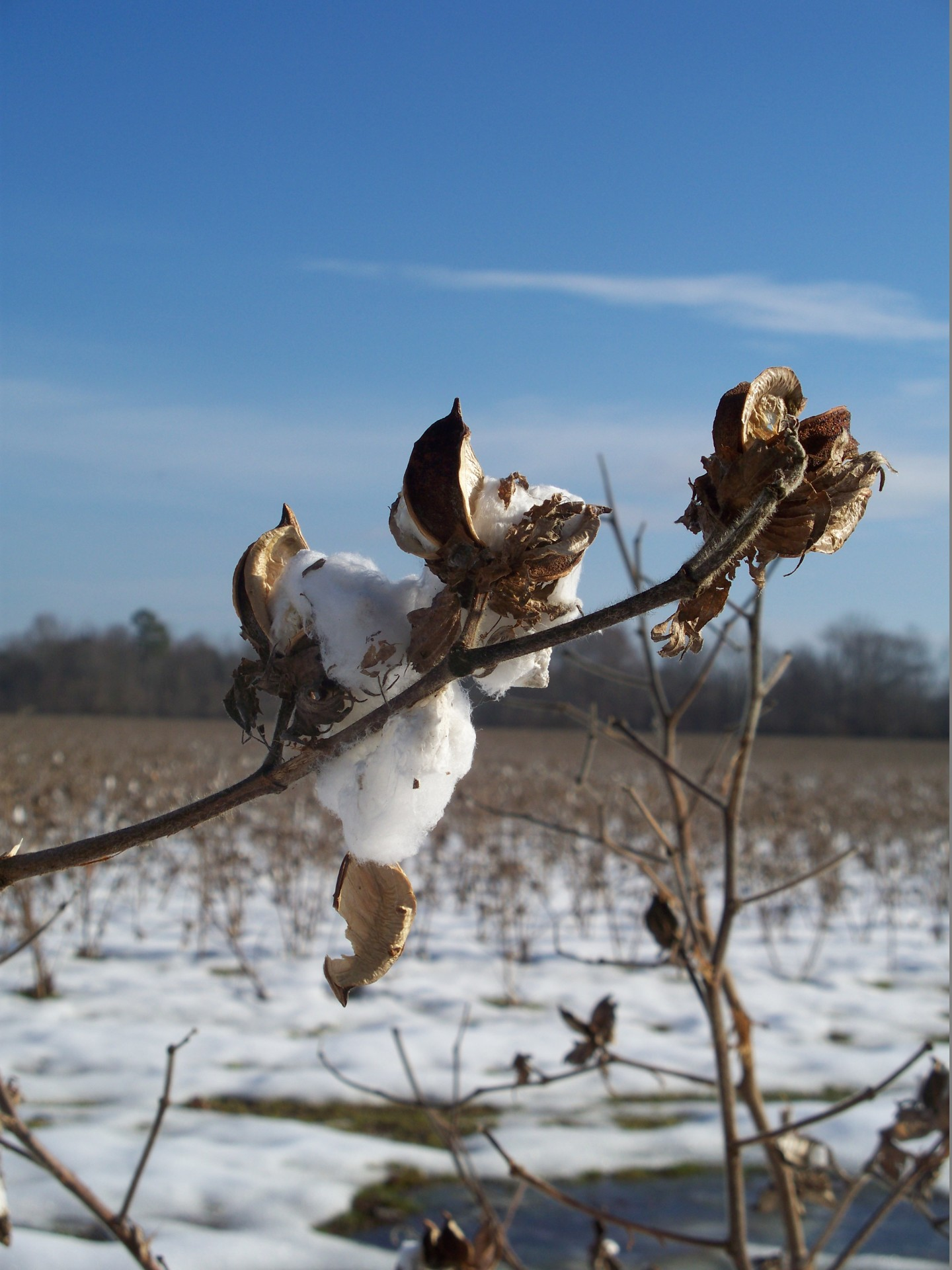 Cotton Country