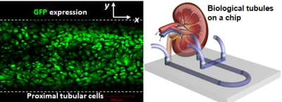 Programmable soft materials and microfluidics