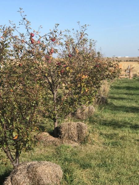 Apples/Peaches