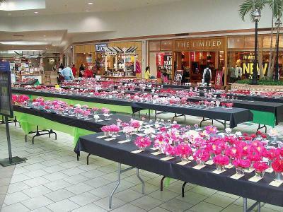 Columbia Camellia Show