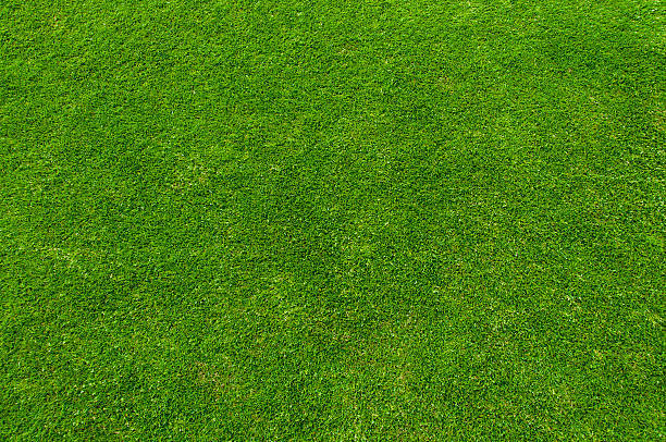 Why Hiring Commercial Lawn Care Services is Beneficial