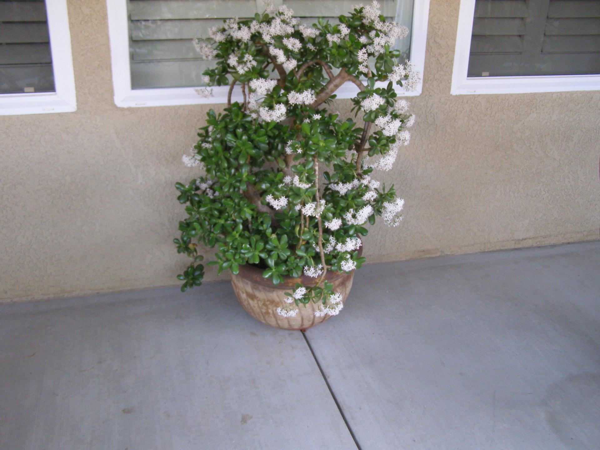Planter Example 6