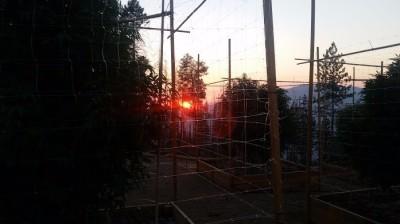 Garden sunsets...