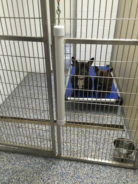 Dog Boarding Kennels | Pet Boarding | Harrisburg Pa