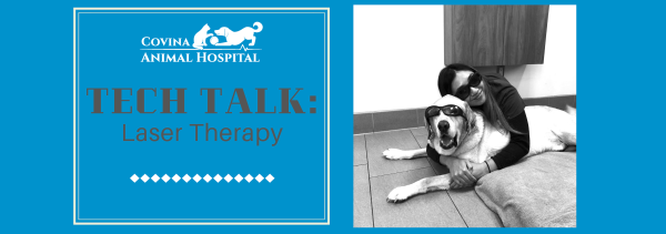 Tech Talk: Laser Therapy