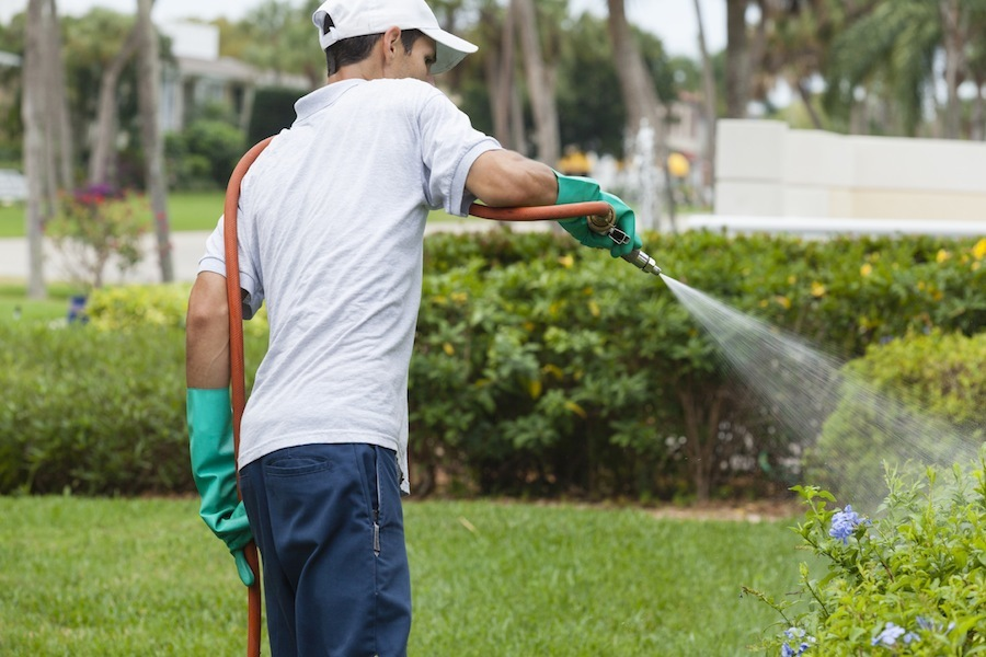 Facts That No One Has Told You About Pest Control Services