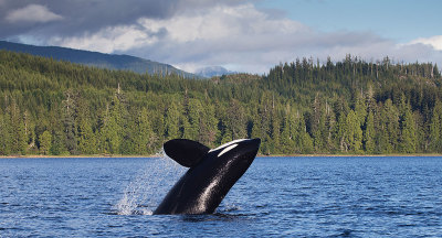 IM Best Whale Watching Tour Plus Program in Tofino 2018