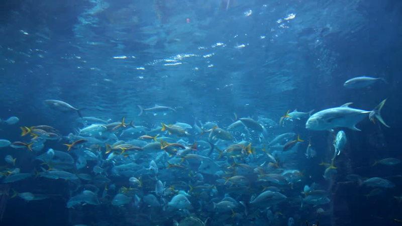 The Basics of Fish Tanks