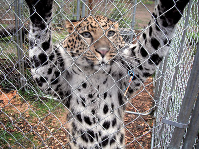 Five great places to see wild animals