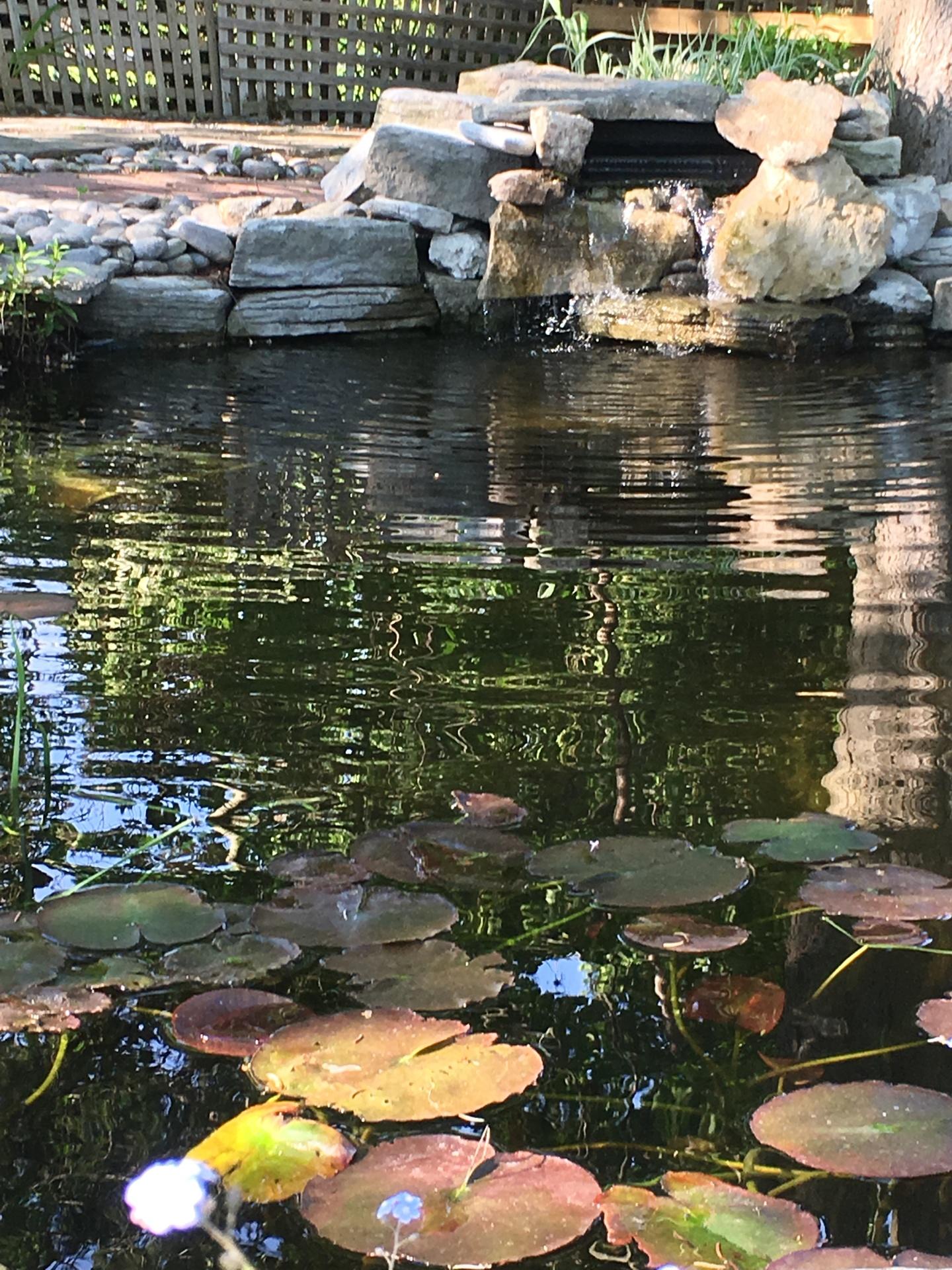 Pond Design, Pond Construction, Pond Maintenance - lavishgardens.ca