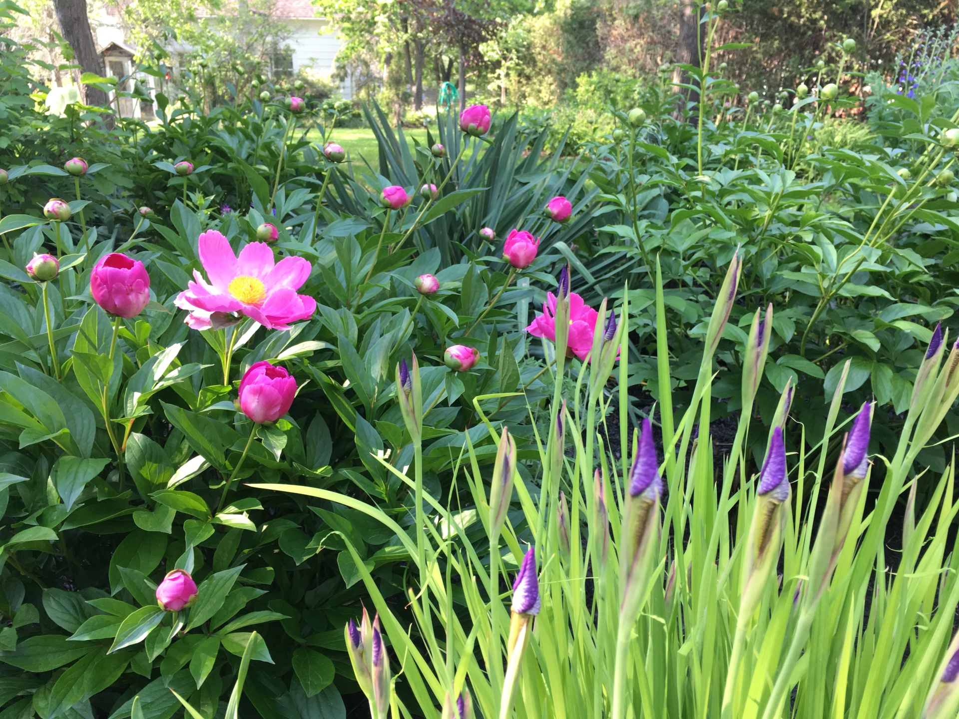 Backyard Perennial Gardens