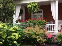 Perennials, shrubs, annuals, window boxes, geraniums