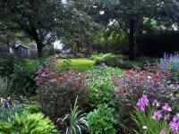 Perennials, Garden Design, Garden maintenance,