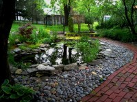 Pond, River rocks, backyard waterfall, goldfish, koi