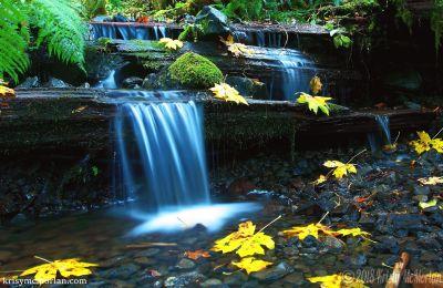 Near Pup Creek Falls, Clackamas River Trail, Oregon