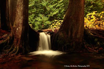 Near Proxy Falls, McKenzie Pass, Oregon