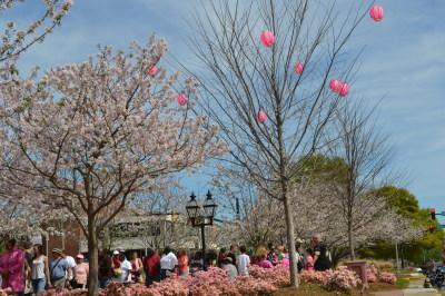 Cherry blossom Festival in Macon